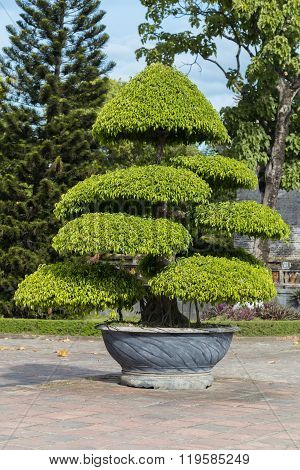 Tree In Imperial Royal Palace Of Nguyen Dynasty In  Hue