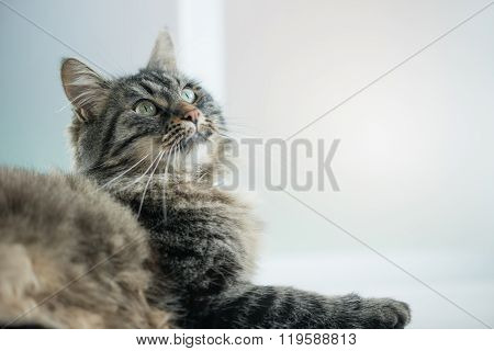 Beautiful Cat Relaxing