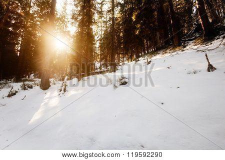 Beautiful winter sunny photo taken in Beskid mountains