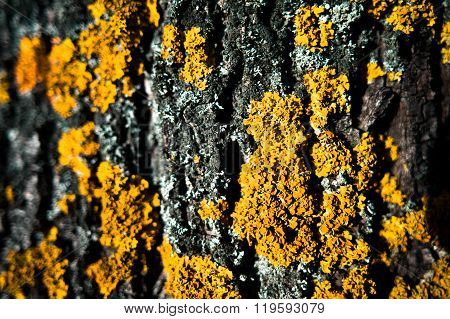 Background - Tree Texture With Moss And Fungus