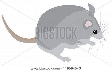 Cartoon Grey Mouse