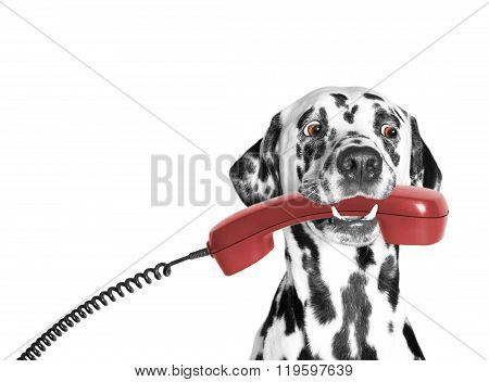 The Dog Holds The Phone In Its Mouth