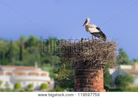 A Pair Of White Storks With Puppies.
