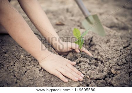 Hand Planting On Crack Soil