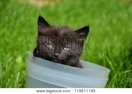 Beautiful young black and brown cat inside bucket. Small cute kitten playing in a flower pot