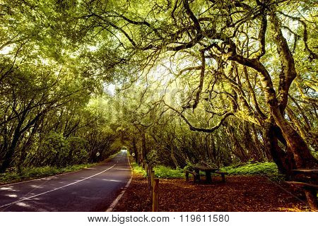 Evergreen forest on La Gomera island