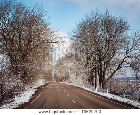 Winter Trees On Snow And White Road