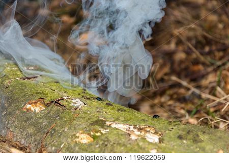 Small Bugs On Steaming The Trunk Of An Old Rotten Tree.