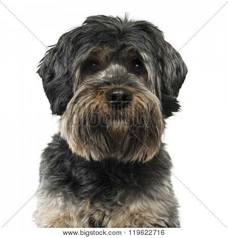Close up of a Cross breed dog looking at the camera, isolated on white (2 years old)