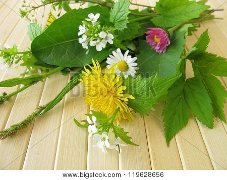 Bouquet of wild herbs