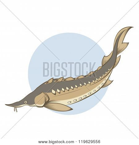 Brown line Sturgeon