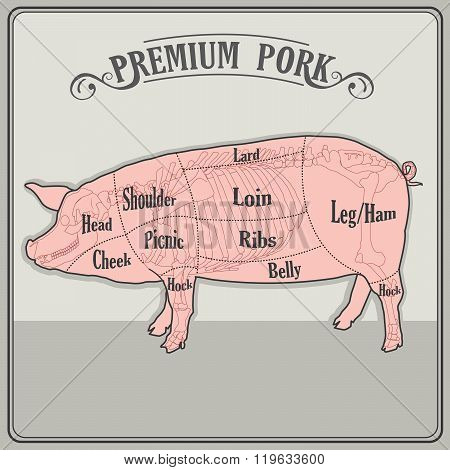 Butcher Pig. Butcher Pig Cuts. Butcher Pig Costume. Butcher Pig Cuts Meat. Butcher Pig For Sale. Pig Skeleton. Vector Illustration. Pig Skeleton For Sale. Pig Skeleton Anatomy. Pig Skeleton Model.