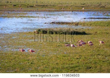 flamingos in patagonian landscape, patagonia, argentina, south america