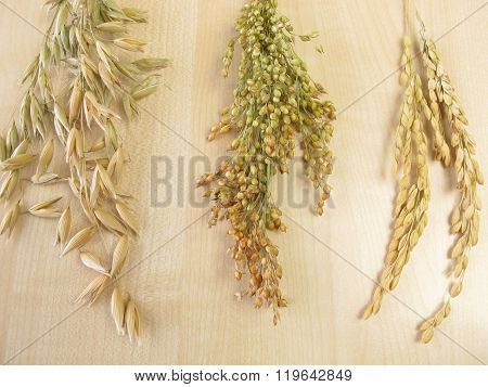 Panicle oats, panicle rice and panicle millet