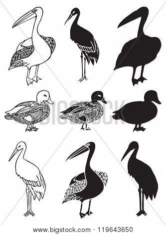 Birds Stork Duck And Pelican