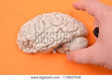 Preparation Of Taking Pictures Of A 3D Human Brain Model From External On Orange Background