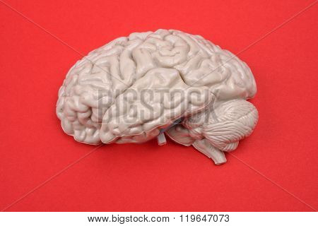3D Human Brain Model From External On Red Background