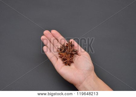 Hand Of A Woman Holding A Pile Of Anise Isolated On Black Background. Spice. Taste. Cooking. Food An