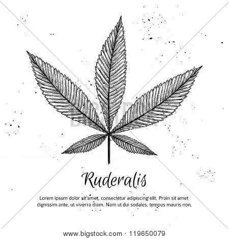 Hand Drawn Vintage Vector Illustration - Medical Cannabis. Sketch
