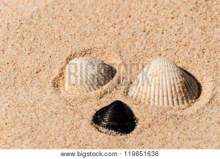 Three Purple Shells