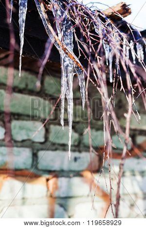 Icicles And Twigs On Roof Of House