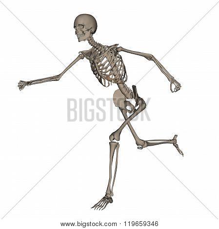 Human skeleton running- 3D render