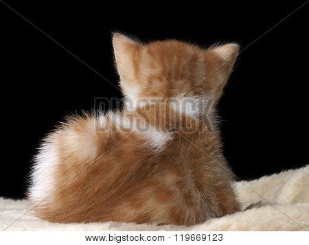 Portrait of a sad kitten