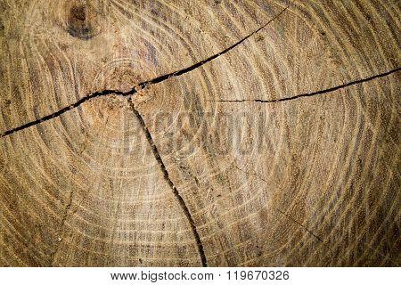 Texture Sawn Wood