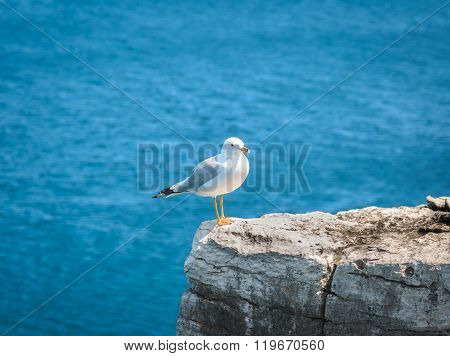 Lonely seagull sitting on the edge of cliff above Cyprus lake