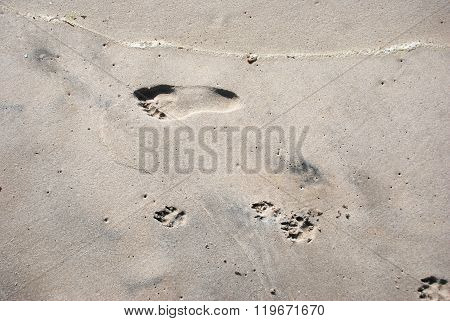 The Footprints Of A Person And A Dog