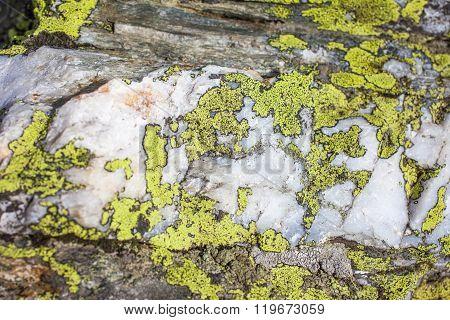 Granite Rock With Lichen