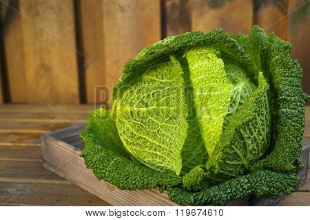 Single Head Of Fresh Green Savoy Cabbage