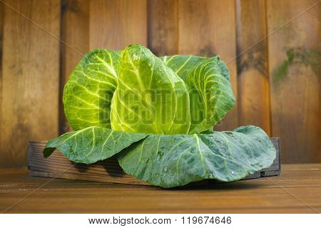 Single Head Of Fresh Green Pointed Sweetheart Cabbage