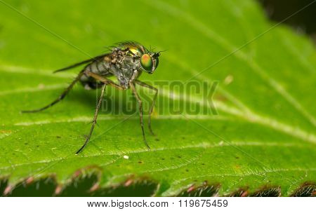 Macro photo of a fly, Insect