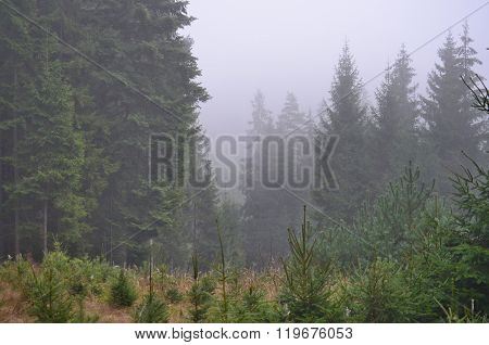 Fog In The Summer Landscape Of South Bohemia