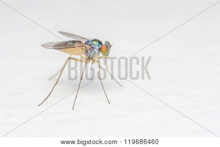 Macro photo of a fly, Insect on a white background