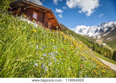 Alpine Hut And Mountain Meadow