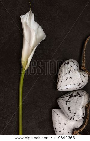 Calla Lily On Dark Background