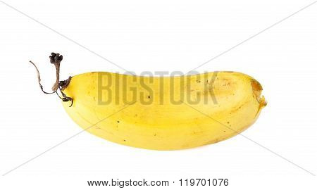 Banana Ripening White Background.