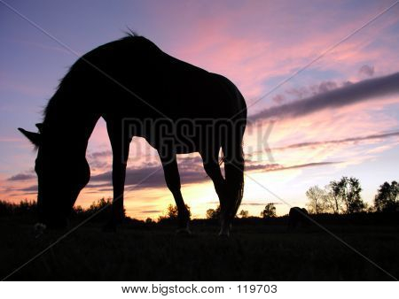 Horse Grazing At Sunset (Silhouette)