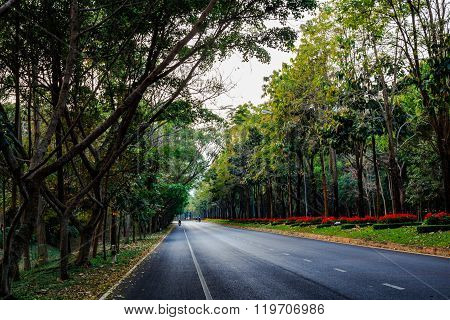 Straight line street with two side green tree