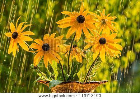 Summer rain garden and flowers of echinacea