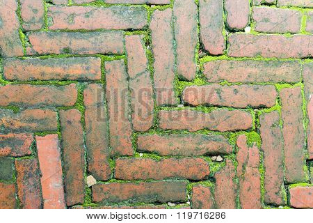 Bricks And Moss