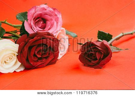 Different Color Roses ,vintage Style