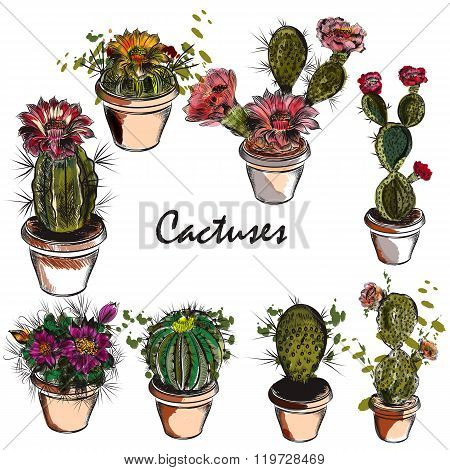 Vector Set Of Hand Drawn Cactuses For Design