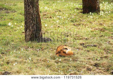 cat sleeping in the garden