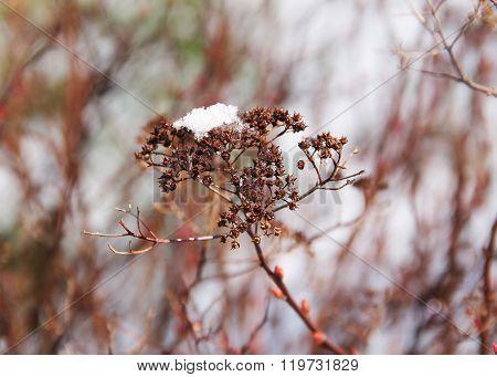sear plant in winter