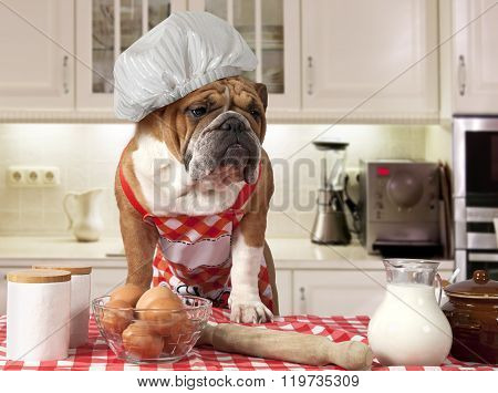 English Bulldog In The Kitchen