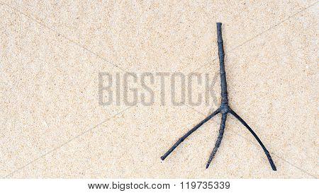 Twig On Sand