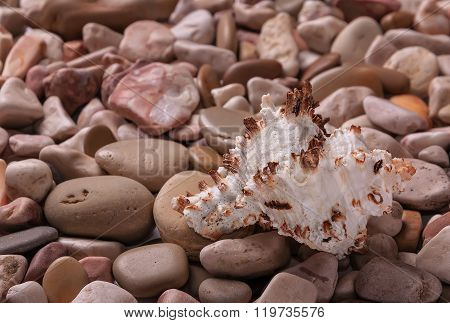 Seashells Background - Macro Shot Of Beautiful Seashells